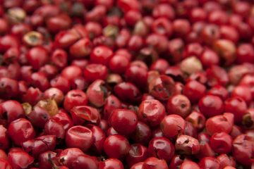 Goji bobice – najmoćnija biljka na svijetu